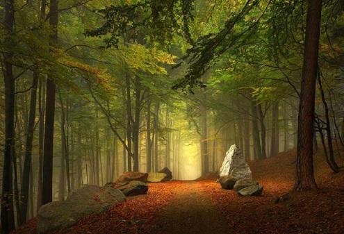 camino_bosque_01