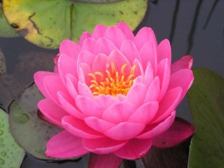 meditacion, soy presencia, mindfulness, reiki, cursos de mindfulness, cursos de reiki, cursos de meditacion, terapia reiki